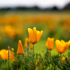 by Michael Mercer - Flowers Flowers in the Wild