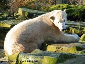 Photo: Knut macht es sich an einem neuen Platz gemuetlich ;-)