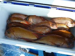 Photo: 釣果発表!オカムラさんのクーラーBOX!最後、追い込んで真鯛14匹でした !