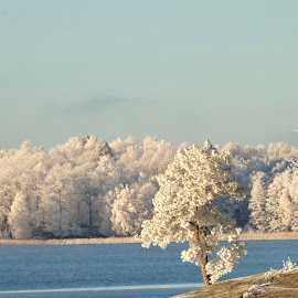 Frost  by Alf Winnaess - Uncategorized All Uncategorized