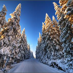 Vinter road by Svein Hurum - Landscapes Forests (  )