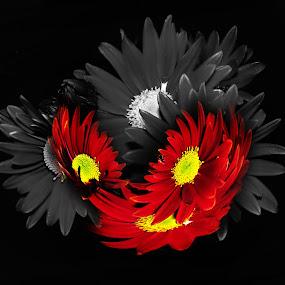 Some unusual combination by Manuela Dedić - Digital Art Things (  )