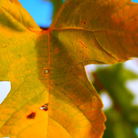 by Joelle McGraw - Nature Up Close Leaves & Grasses ( autumn, green, fall, 2012, leaf, yellow, leaves, close up )