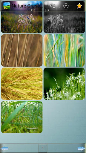 Nature Grass Wallpapers