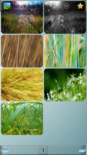 自然草壁紙