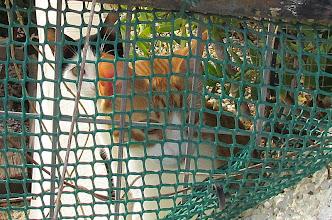 Photo: Inne på en villatomt kom dessa två katter springandes i full fart för att sätta sig vid staketet och kolla på oss