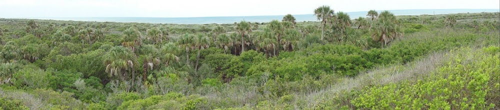 Photo: Panoramic view from top of 'viewing platform' at Turtle Mound. A spectacular view to say the least.