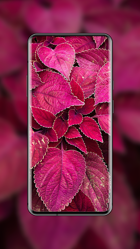 4K Wallpapers - HD & QHD Backgrounds 7.1.146 screenshots 11