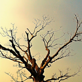 Alone.... by Debapriya Bhattacharya - Nature Up Close Other Natural Objects