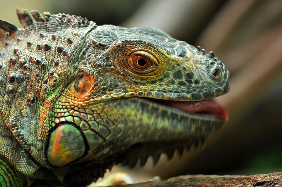 by Khoirul Huda - Animals Reptiles