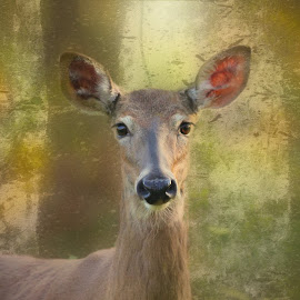 White tail doe by Mary Waters - Animals Other Mammals ( deer, mammal, nature, animal, digital art )