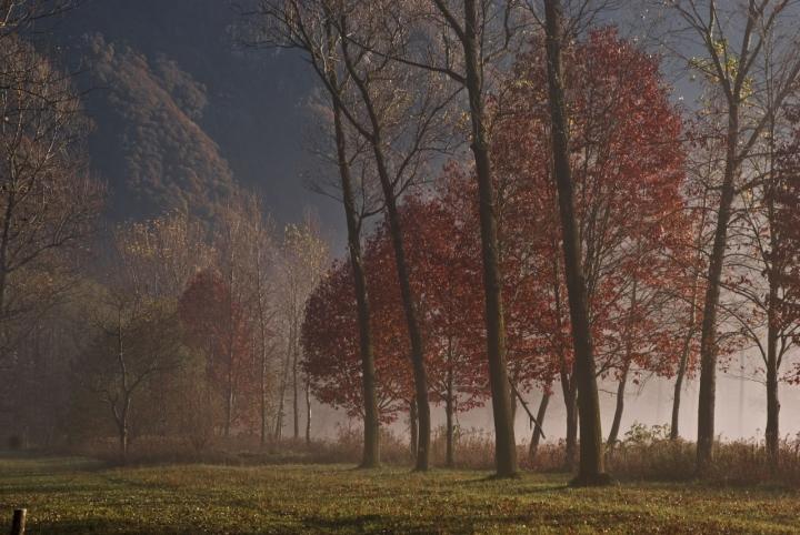 Tra la nebbia... di Tiziana Detoni