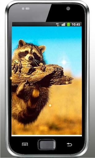 Funny Animals live wallpaper