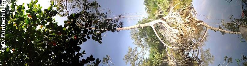 Photo: Mangrove at Ezile bay