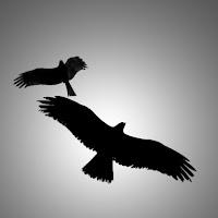 Eagles di