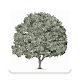 Download Money Tree - money history manager For PC Windows and Mac