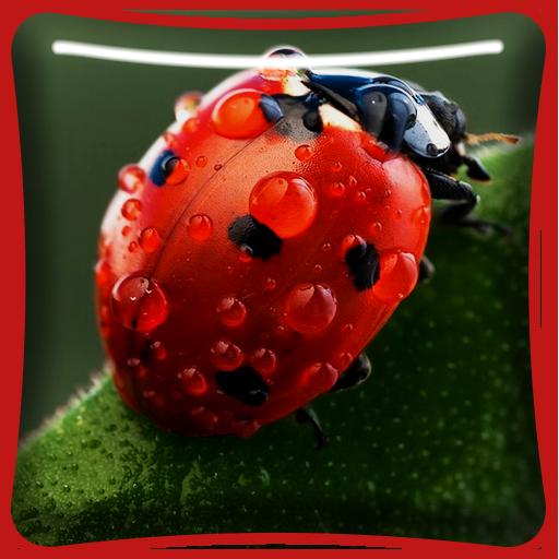 Ladybugs Macro Live Wallpaper Aplikacije Na Google Playu