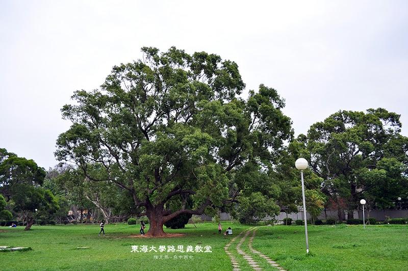 路思義教堂周遭有許多樹木