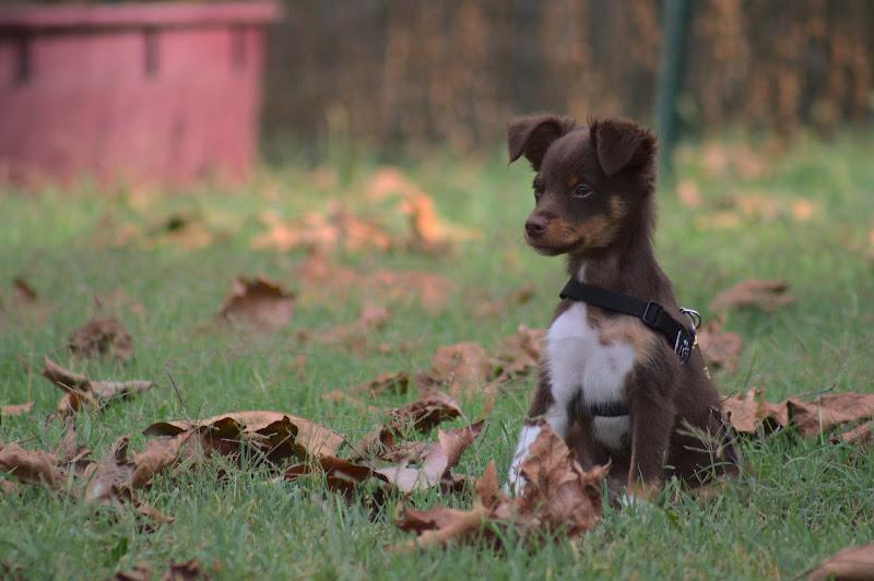 Primo autunno di Madini