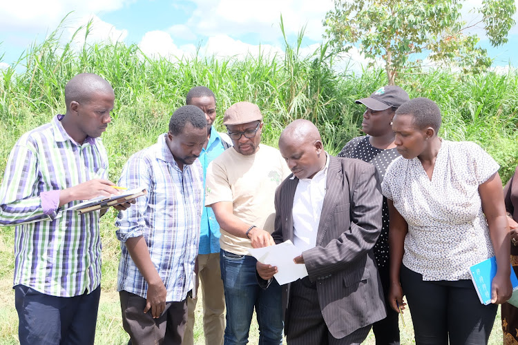 Rice breeders consult on hybrid rice production in Mwea.