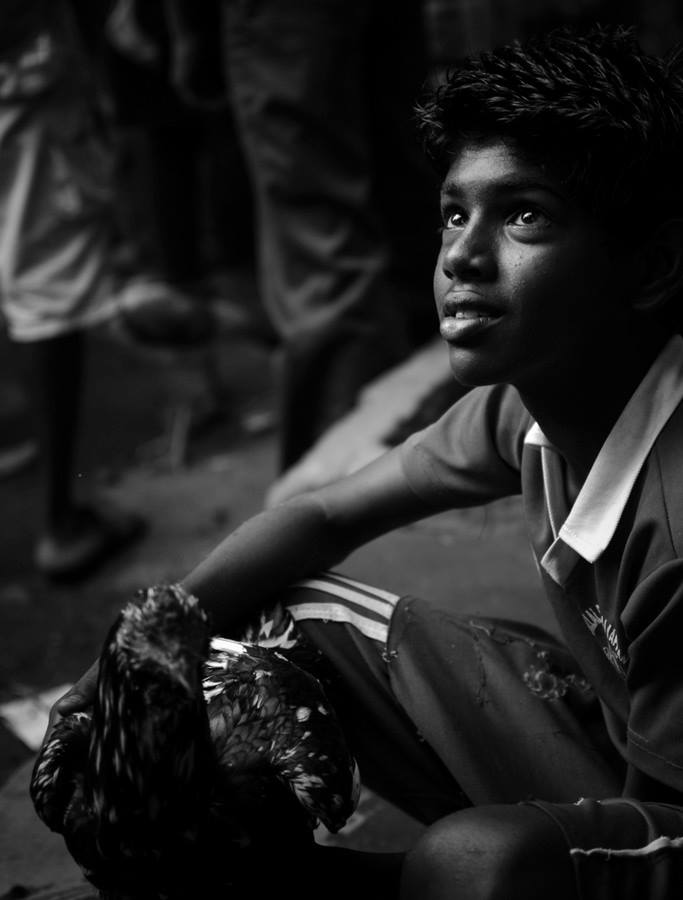 The chicken seller A young boy selling chickens in the market, India http://500px.com/photo/49054254 if u like my work, also check out my page : www.facebook.com/rsquare by Roehan Rengadurai - People Street & Candids (  )