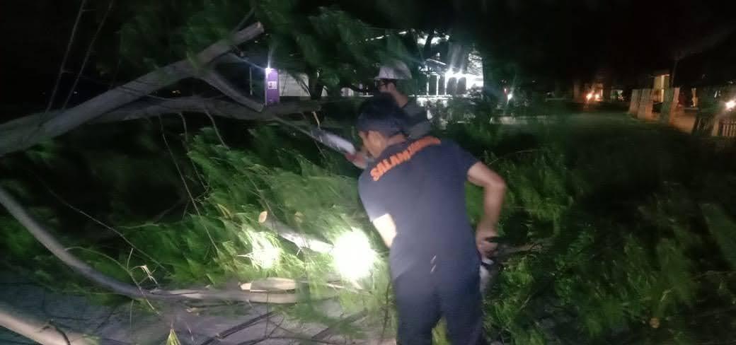Pohon Cemara Tumbang Menimpa Pengendara BPBD Bergerak Cepat Lakukan Evakuasi