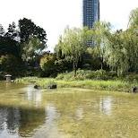 Hinokicho park in Tokyo, Tokyo, Japan