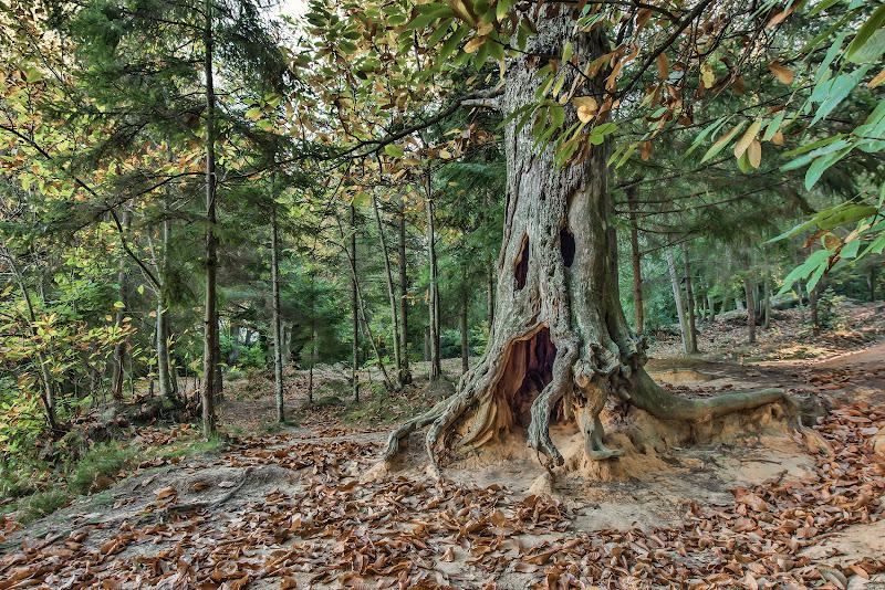 Il guardiano del bosco di Giancarlo Lava