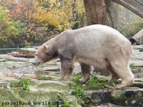 Photo: Knut ist auf dem Weg zum Sandhaufen ;-)