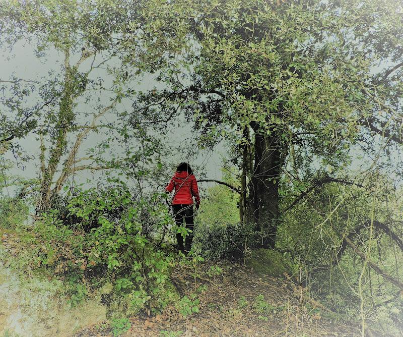 Sentieri in solitaria di sara_fianchini