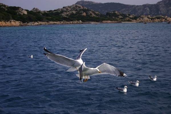 Le ali della libertà di michelangelo66