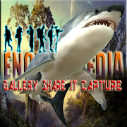 Encyclopedia Of Shark
