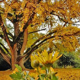 by Bojan Rekic - Nature Up Close Trees & Bushes