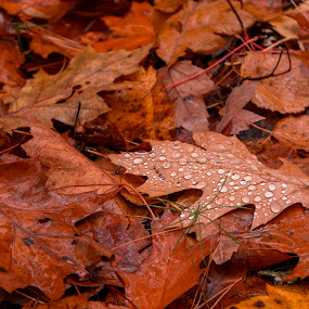 the tears of autumn by Gigi Kent - Nature Up Close Leaves & Grasses