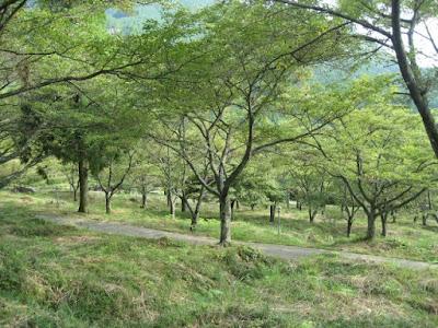 丹治温泉春蘭荘 周りの桜