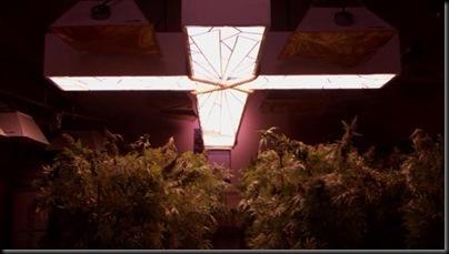 Weedcross2