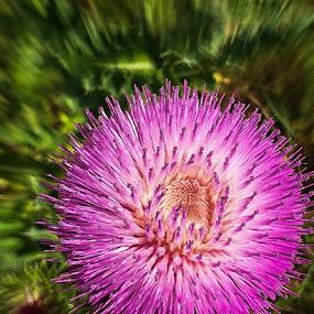 Pink by Ray Ebersole - Flowers Single Flower ( flowers )