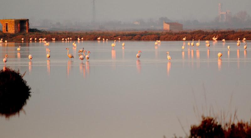I fenicotteri rosa si specchiano sull'acqua tra la nebbia ! di ottavioart