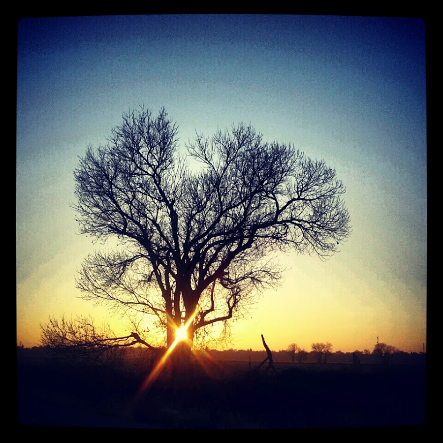 by Matt Zheng - Instagram & Mobile Android ( tree, nature, sunset )