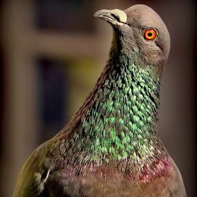 by Jagadeesh Mummigatti - Animals Birds