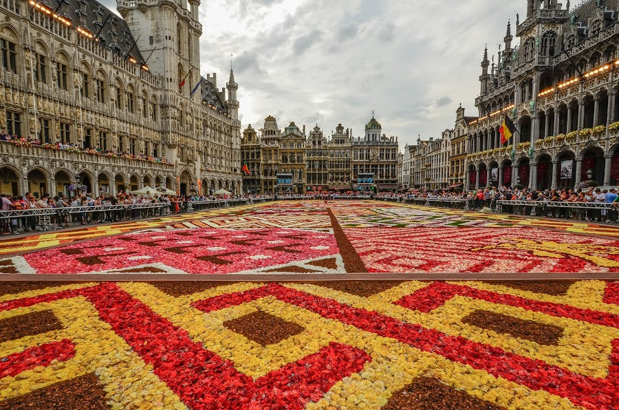 Flower carpet 2012, Brussels by Adriana Yampey - City,  Street & Park  Street Scenes