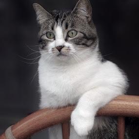 Observation by Jason Murray - Animals - Cats Portraits ( animals, cat, observation, funny, relaxing, cute, cats, watching, cat portrait, view, feline, felines, observant, animal )