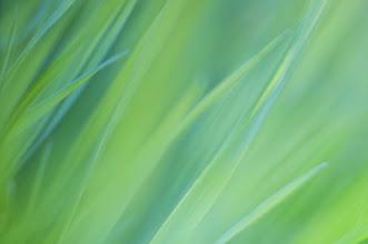 Photo: Long sunlit meadow grass