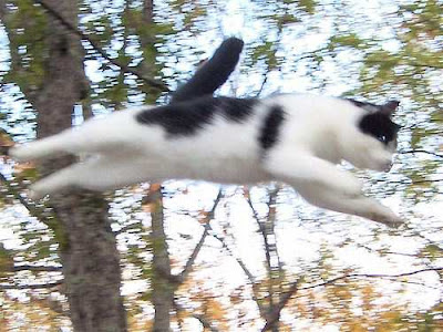 cat flying through the air in a wood