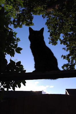 cat silhouetted against the sky