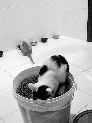 cat eating in big bowl