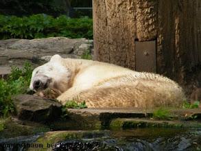 Photo: ... und ein Schlaefchen halten ;-)