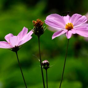 by Rajib Chatterjee - Flowers Flowers in the Wild