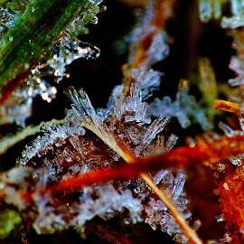 When the ice crystals melt.... by Izvorul Muntelui Bicaz - Nature Up Close Other Natural Objects