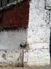 Photo: Diesem hier gab ich den Spitznamen Hahnen Dzong